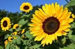 8月の花.jpg