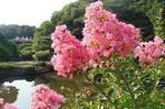 8月の花�W.jpg