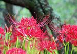 9月の花.jpg