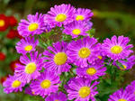 9月の花�V.jpg