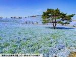 ひたち海浜公園.jpg