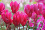 冬の花�U.jpg