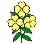 月見草の花�U.jpg