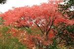 秋 紅葉.jpg