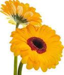 花は咲く�X.jpg